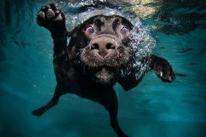 """""""Dog Splash"""" Animal Fundraiser @ Budda Bar"""