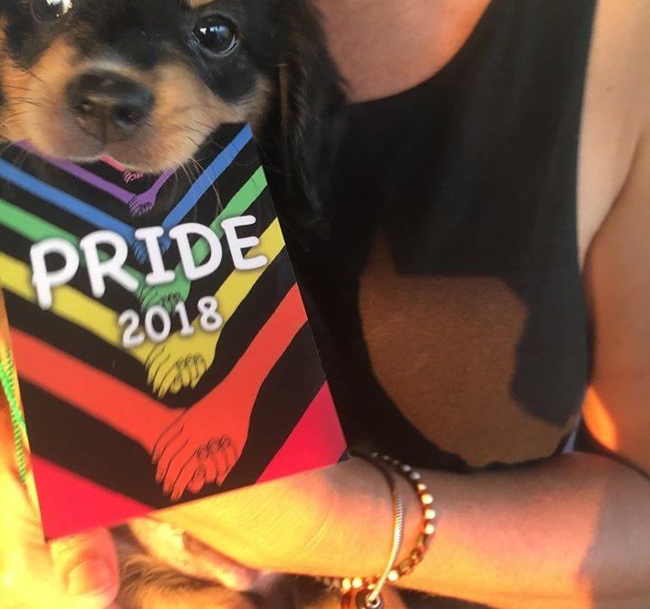 Annual Dog Splash (Pride)